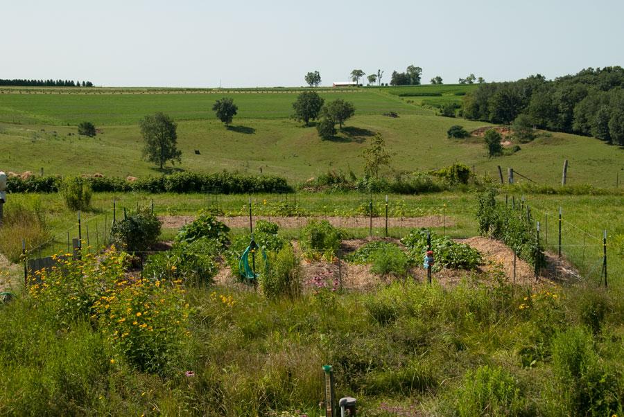 Garden on August 2nd