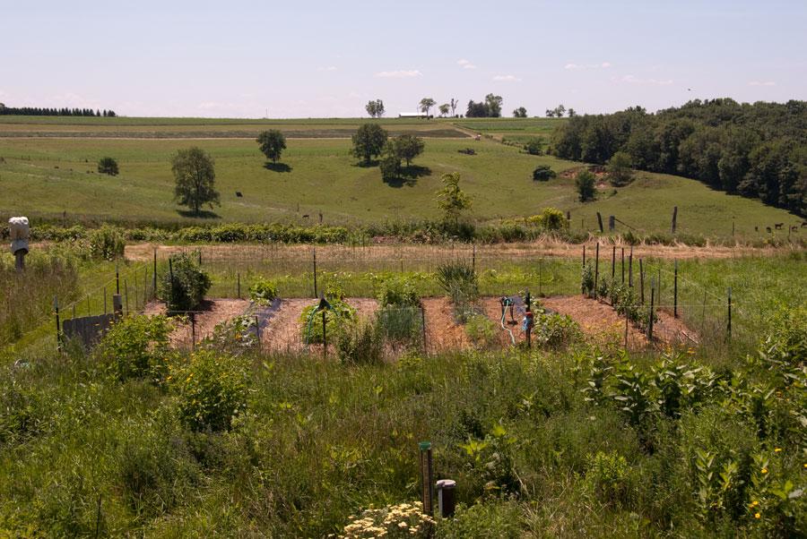 Garden on July 5