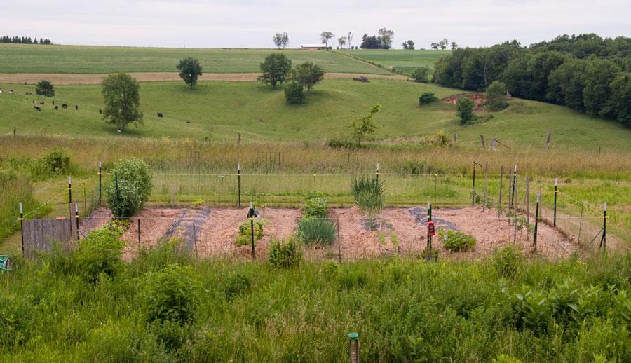 Garden on June 22