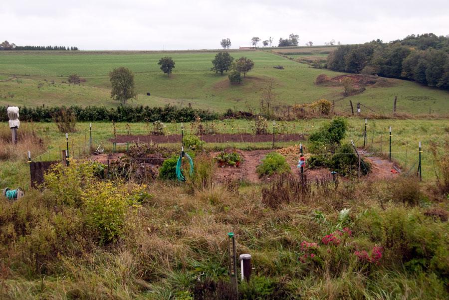 Garden on October 4th